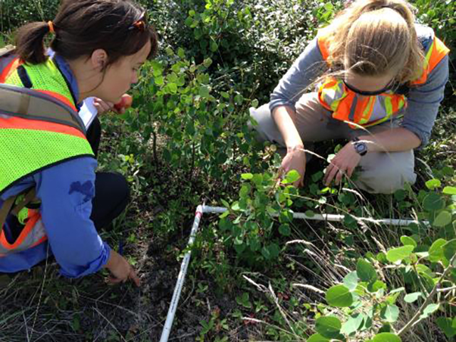 Employees identifying plant species