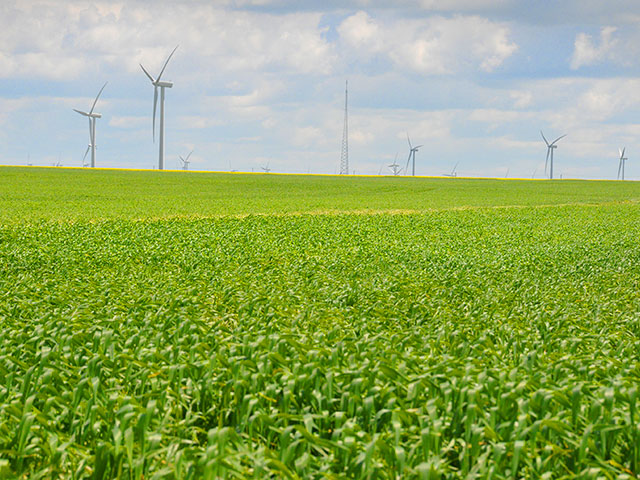 Green crops with wind turbines in the distance